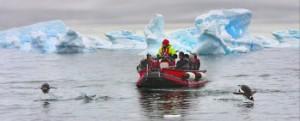 Gentoo_penguins_Paradise_Island_Brian_Wong_GI