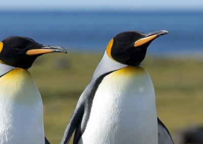 Polaris Tours: Die Route der Entdecker, Antarktis Seereise 25 Tage