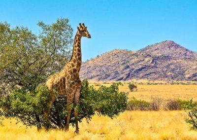 Chamäleon: Namibia – 14 Tage Wunderwelten-Reise Sossusvlei, ab € 1.999,-