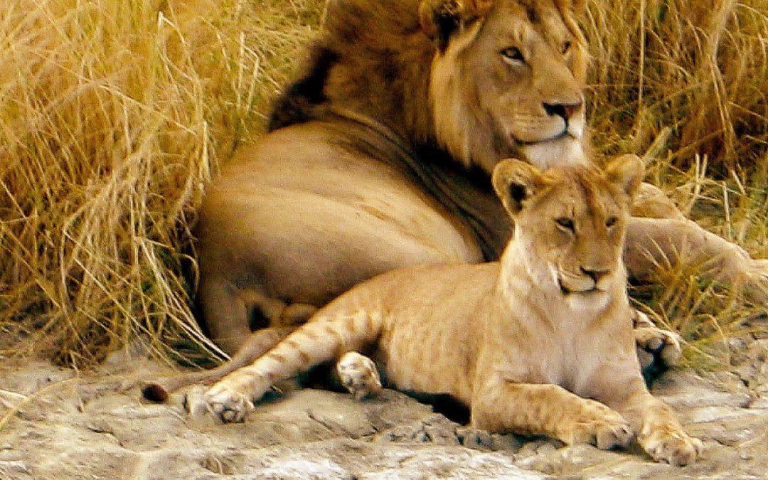 Chamäleon: Tansania – 15 Tage Wunderwelten-Reise Serengeti, ab € 3.999,-