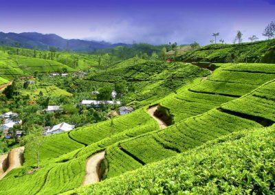 Chamäleon: Sri Lanka – 15 Tage Wunderwelten-Reise Kandy, ab € 3.299,-