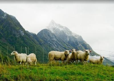 Jensenreisen-Gallerie-Naturreisen-Nordeuropa 11