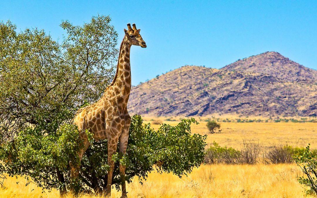 Chamäleon: Namibia – 14 Tage Wunderwelten-Reise Sossusvlei, ab € 3.299,-
