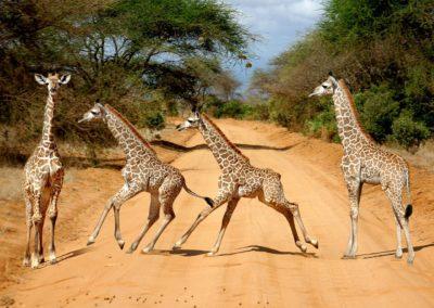 AF-TAN-T-Giraffe_234567