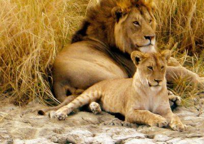 Chamäleon: Tansania – 15 Tage Wunderwelten-Reise Serengeti, ab € 3.799,-