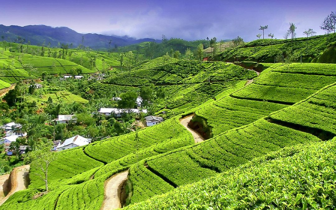 Chamäleon: Sri Lanka – 15 Tage Wunderwelten-Reise Kandy, ab € 2.699,-