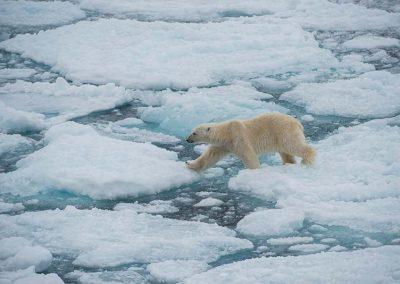 Im Land der Eisbären – 8 Tage ab € 3.930,-