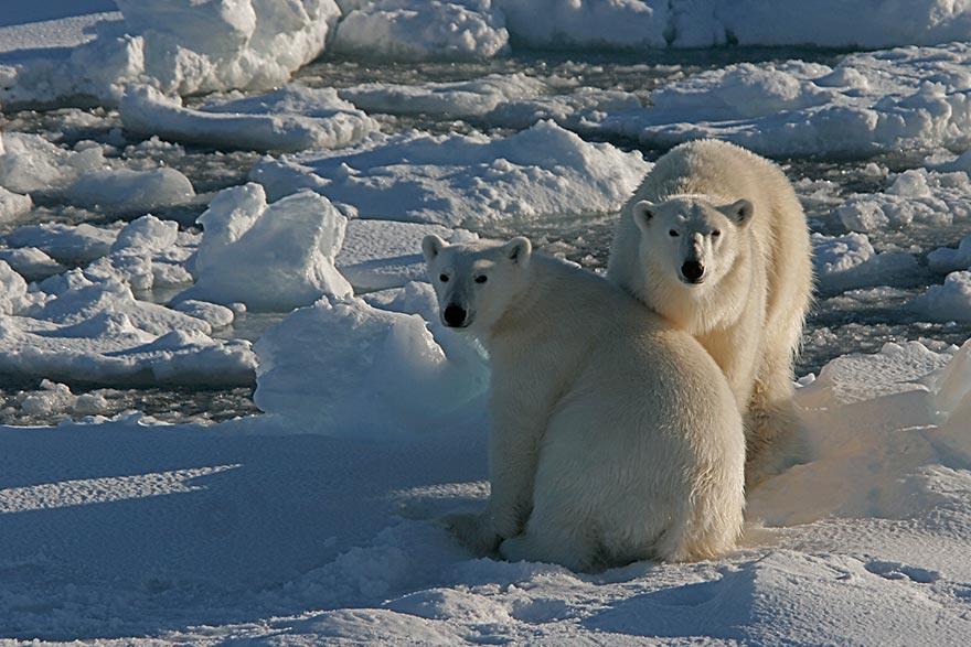 Nordspitzbergen – Auf der Suche nach Eisbären – 8 Tage ab € 4.365,-